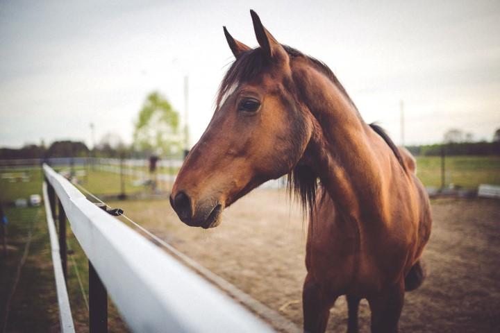 Økonomiske tal for hesteindustrien