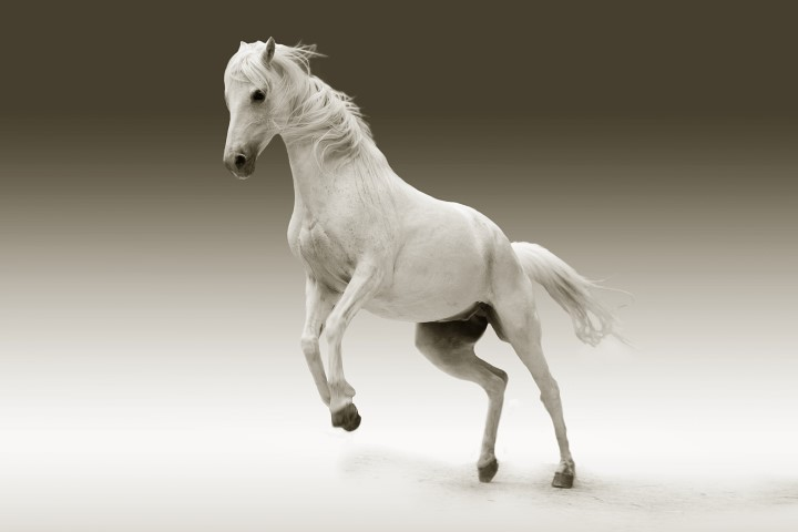 Heste har stor betydning for det økonomiske regnskab i mange EU lande